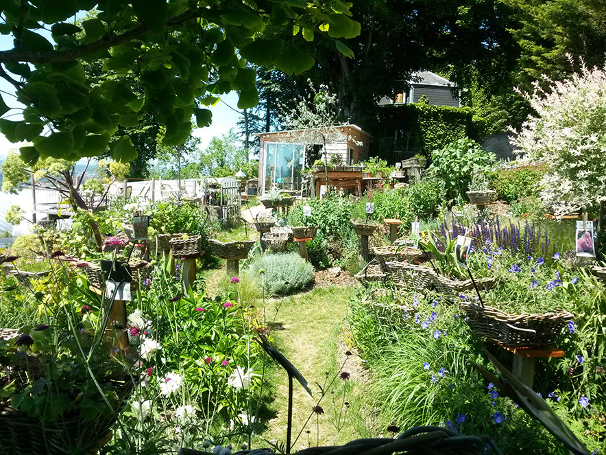 Plantes vivaces pr sent es dans un jardin l 39 anglaise for Jardin les plantes