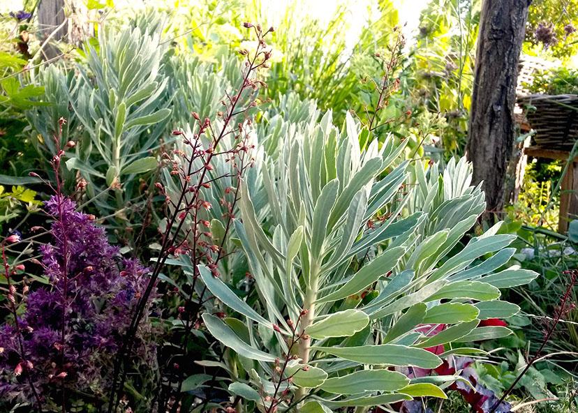 Plantes vivaces auvergne vichy for Jardin plantes vivaces