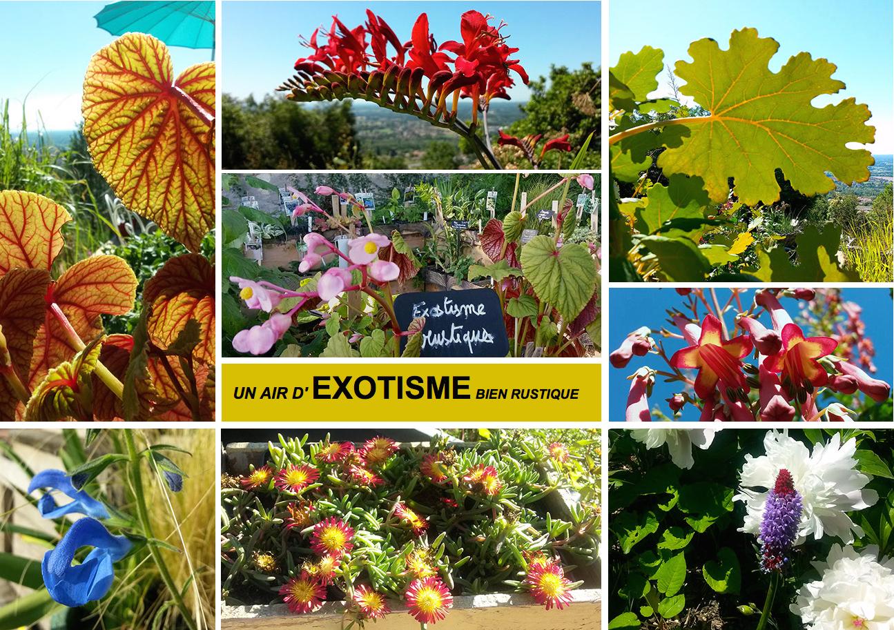 pepiniere specialises en plantes vivaces à Vichy en Auvergne les ...